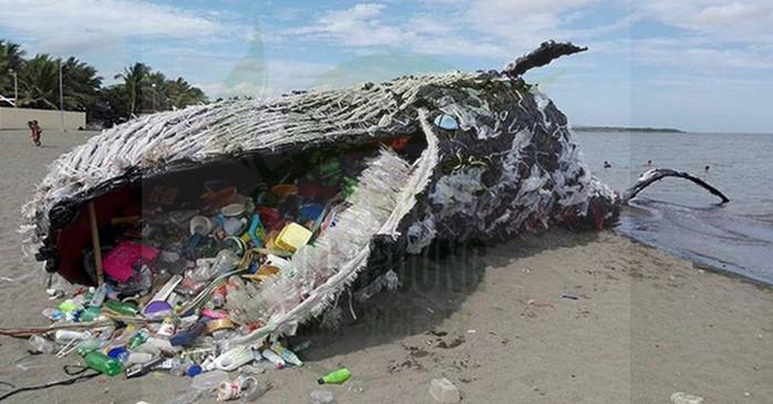 ô nhiễm nước biển nặng nề