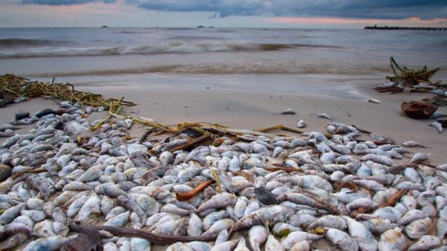 sự cố môi trường gây cá chết